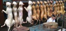 Chine: Un festival culinaire à base de chien