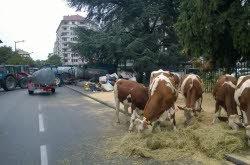 ANNECY: Gens du voyage : les agriculteurs de Haute-Savoie bloquent la préfecture
