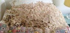 Grande-Bretagne: Une armée de 5000 guêpes colonise un lit - New York: Elle vivait avec 50.000 abeilles au plafond