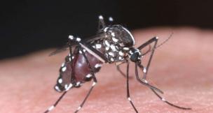 Un spécimen de moustique tigre identifié en Seine-et-Marne