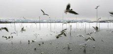 L'Europe perd 421 millions d'oiseaux en 30 ans
