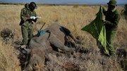 2014, année noire pour les rhinocéros d'Afrique du Sud