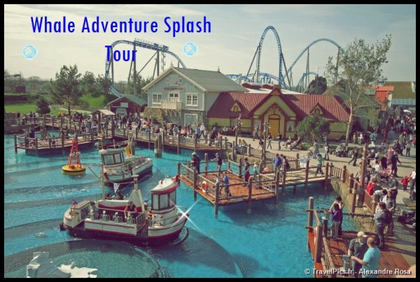 ~ Whale Adventure Splash Tour ~