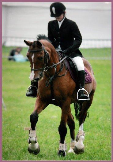 Présentation de mes chevaux.