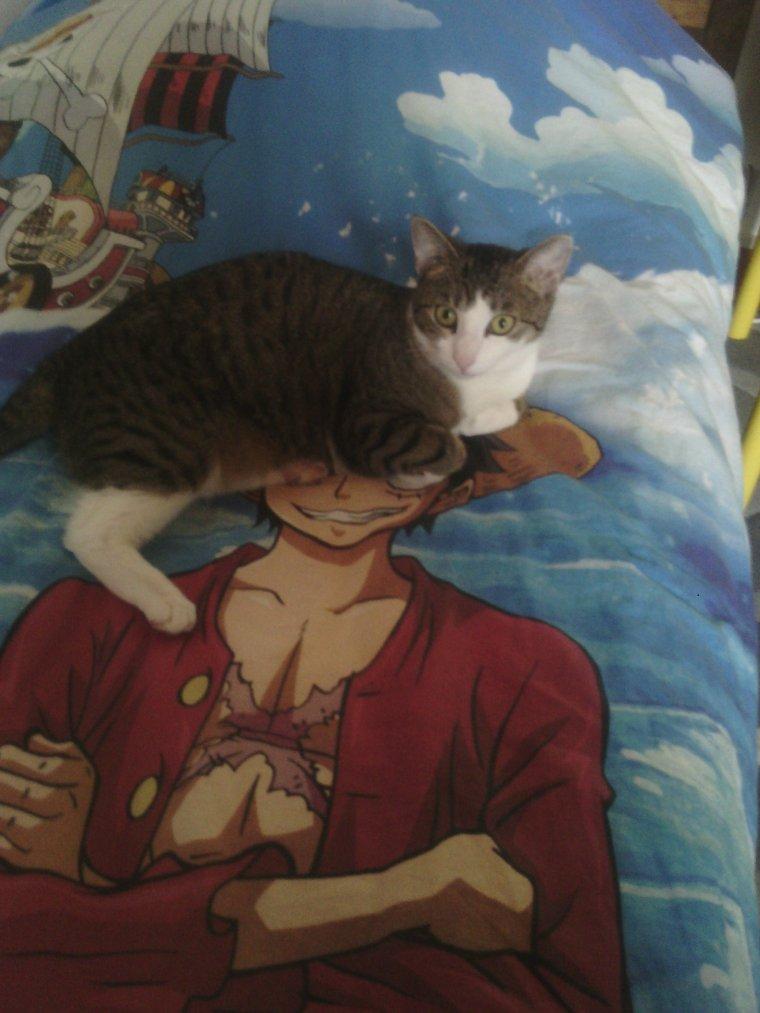 Mon chat écrase luffy x3