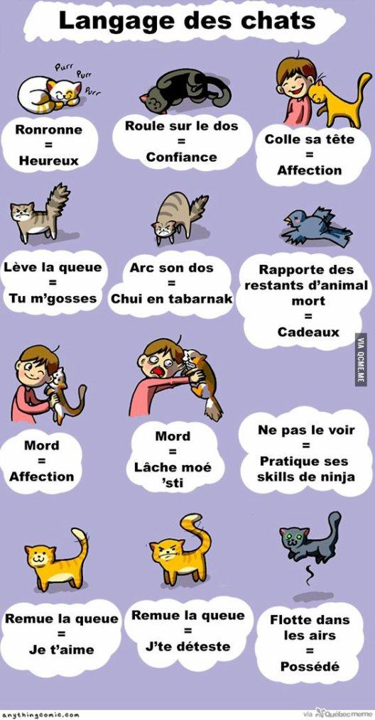Guide complet pour comprendre les chat ! :'3