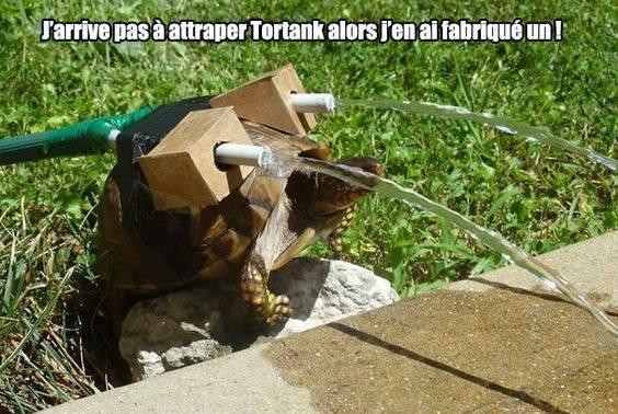 Vous n'auriez pas une tortue ?? *w*