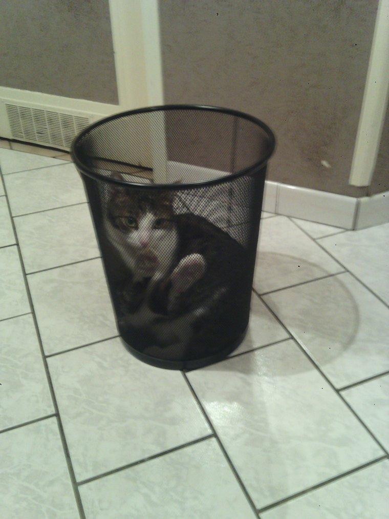 Animal de compagnie défectueux poubelle QAQ