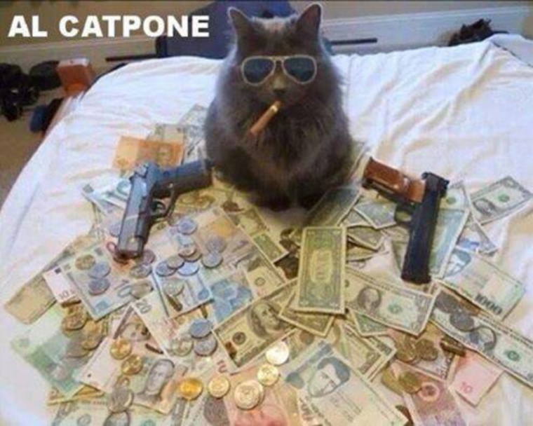 Badass le chat dis donc xD