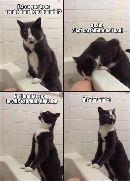 Meow meow ! ♥