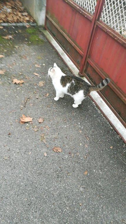 Deviner ce que je vois dehors :'3 un chat tous rond tous doux tous mimi *3*