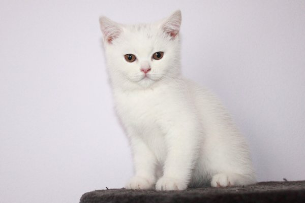 Liloo femelle 11 semaines