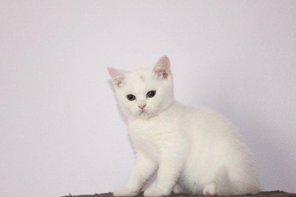 Lilly femelle 11 semaines ( à réserver )