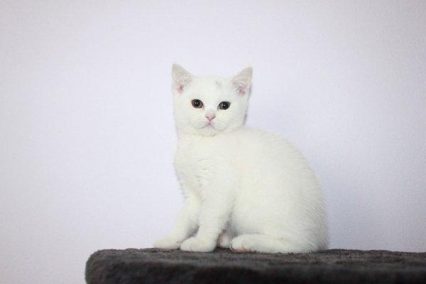 Lilly femelle 12 semaines disponible de suite