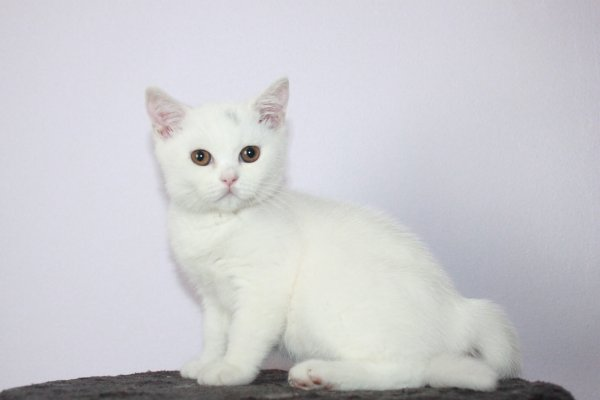 Lilly femelle 13 semaines disponible de suite