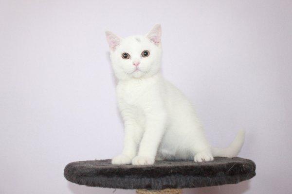 Lilly femelle 16 semaines disponible de suite