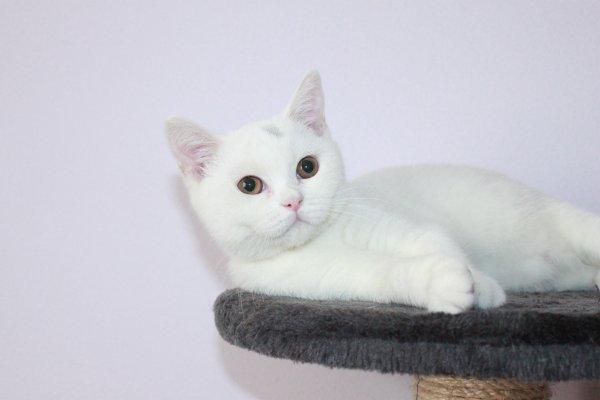Lilly femelle  19 semaines disponible de suite