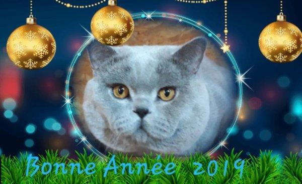 Nous vous souhaitons une Bonne et Heureuse Année 2019