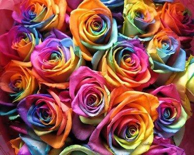 Magnifique Bouquet De Roses Multicolor Blog De Christine 69701