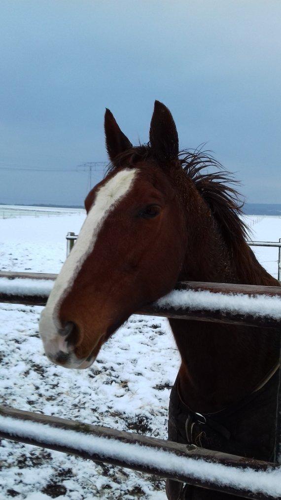 L'hiver,enfin!!!
