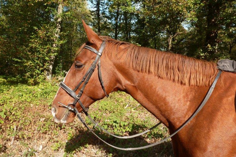 Sortie en Forêt avec Royale et profiter d'une douceur exceptionnelle pour la saison!