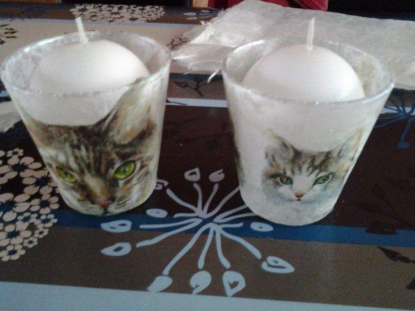 photophores chats pour la SPA