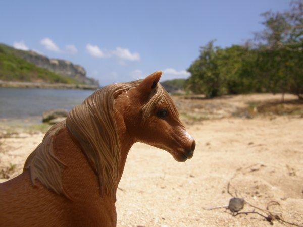 Shooting photo de Guadeloupe ♥