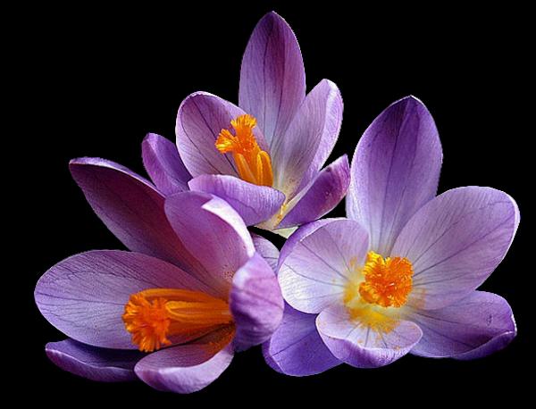 Condoléances.... :( :( :( :( pour toi Mamie Filouse.....je n'ai pas de mots ...je ne saurais quoi te dire pour consoler ton coeur brisée....mais toutes mes pensées vont vers toi et ta famille.....