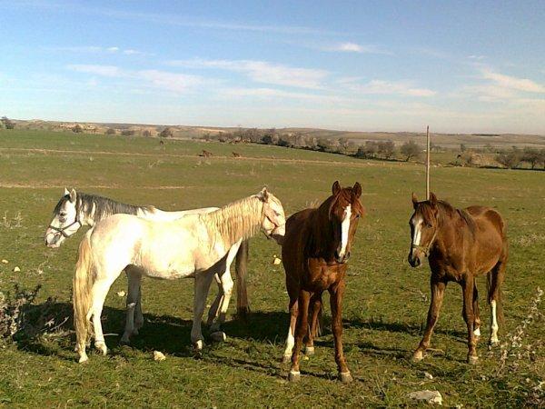 Centre d'élevage de cheval au tiaret