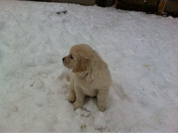 je vais bientôt avoir un chien