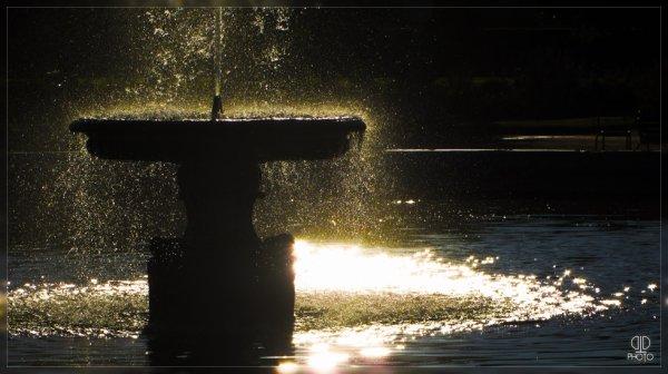 L'or Noire
