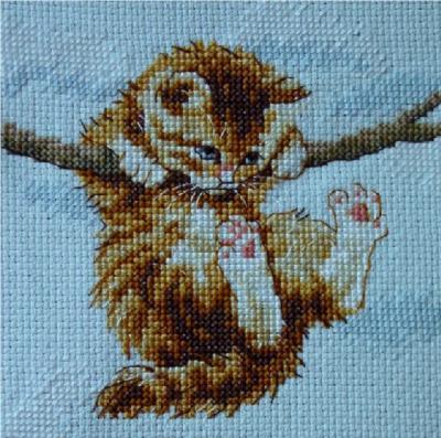 Petit chat roux