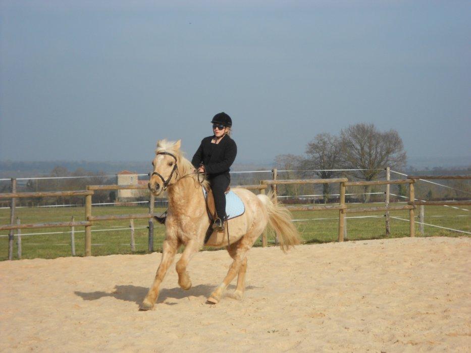 Mon cheval Jumbo