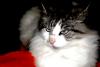 Photo perso d'un de nos plus beaux chat!