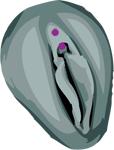 Les piercings génitaux féminins