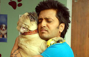 Adorable Placements in B'wood Movies - Dogs Outdoing Silver Screen