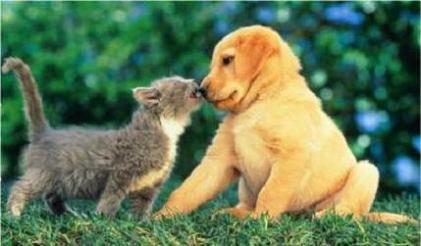 un chaton et un ptit chiot