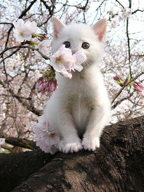 1 chaton blanc qui ce cache derriere un arbre