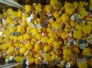 Photo de pictures-duck