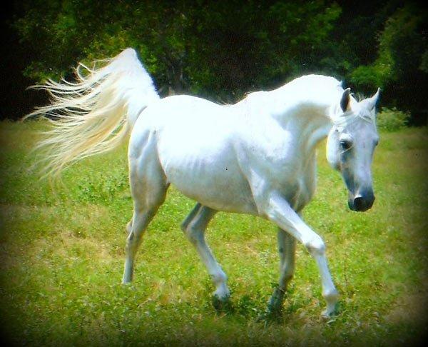 Cheveau blog de cheveau trop mignon lea - Comment dessiner un cheval au galop ...