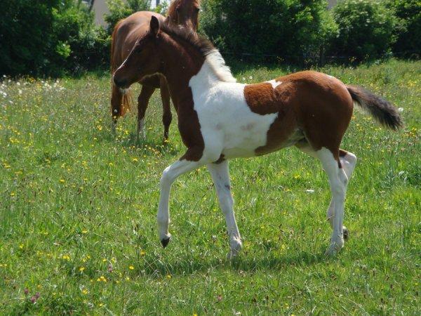 poney <3 <3 <3 <3 <3 <3