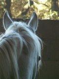 Photo de AV-Materiels-Equestre