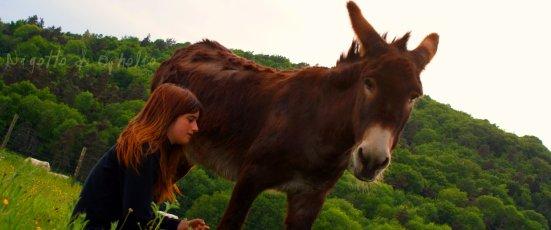 Bienvenue sur donkey-nigette