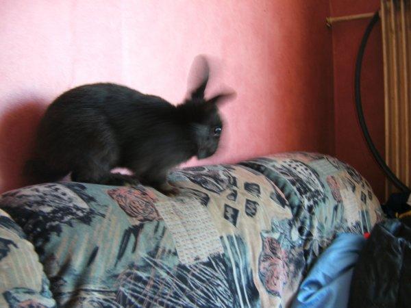 encorre bebe lapin♥♥