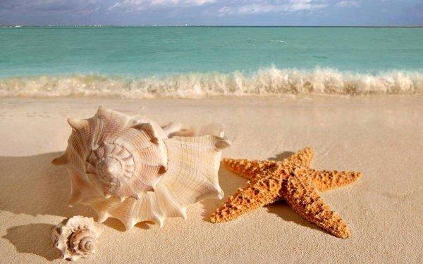 J ai fait l amour avec la mer