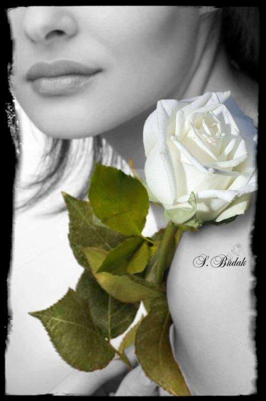 ROSE    D ' AMOUR .....!