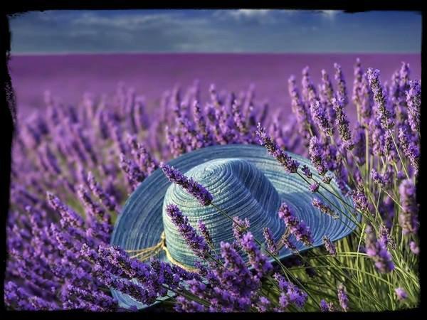 Un rêve couleur  Lavande .....