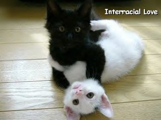 Kittens Love Interracial too