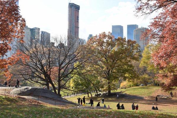 Ballade à Central Park
