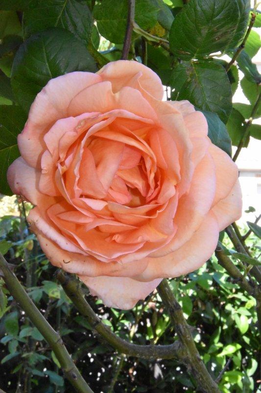 En écho à Isa (Isaphilna) dites le avec des fleurs !!